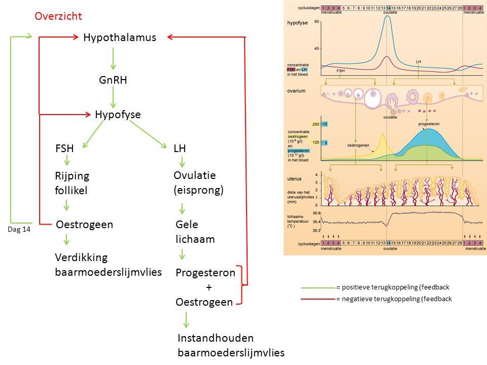 Hypothalamus GnRH Hypofyse FSHLH Rijping follikel Oestrogeen Verdikking baarmoederslijmvlies Ovulatie (eisprong) Progesteron + Oestrogeen Gele lichaam