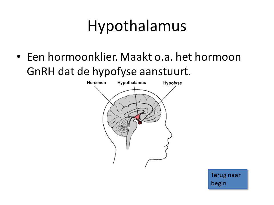 Hypothalamus Een hormoonklier. Maakt o.a. het hormoon GnRH dat de hypofyse aanstuurt. Terug naar begin Terug naar begin