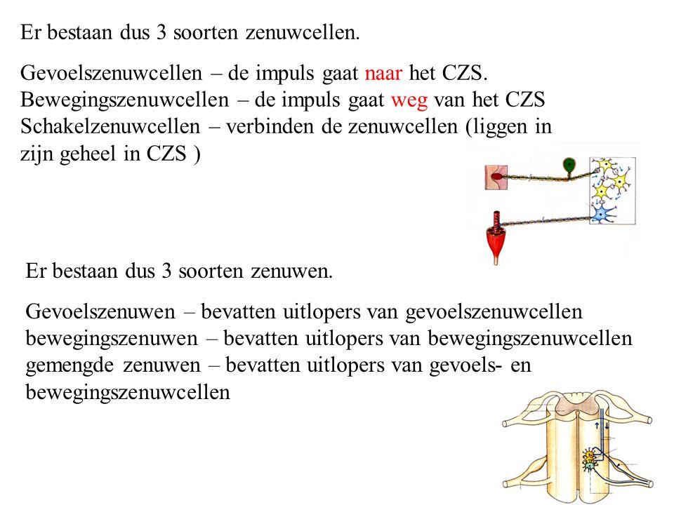Er bestaan dus 3 soorten zenuwcellen.Gevoelszenuwcellen – de impuls gaat naar het CZS.
