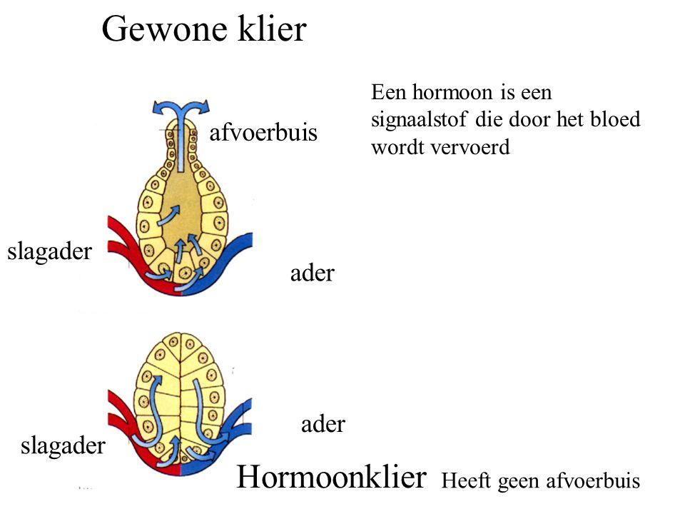 slagader ader afvoerbuis slagader ader Gewone klier Hormoonklier Heeft geen afvoerbuis Een hormoon is een signaalstof die door het bloed wordt vervoerd