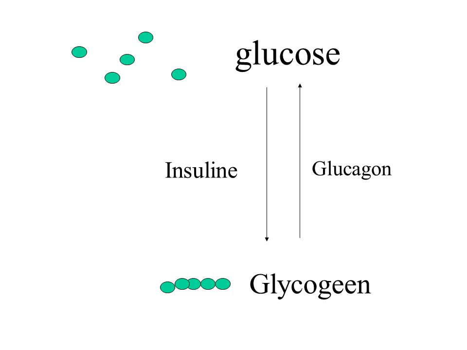 glucose Glycogeen Insuline Glucagon