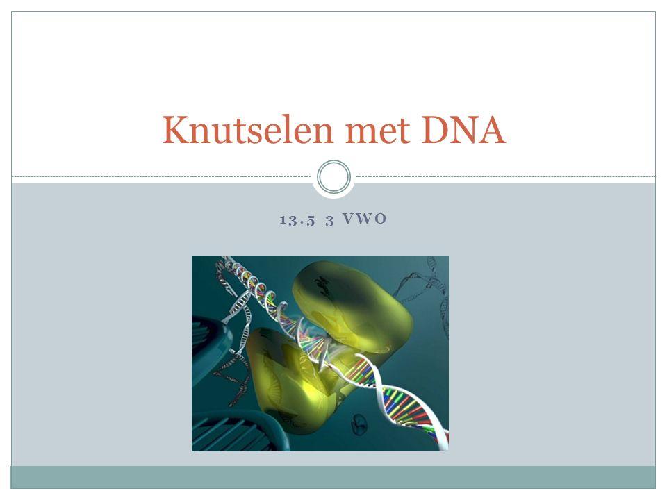 13.5 3 VWO Knutselen met DNA