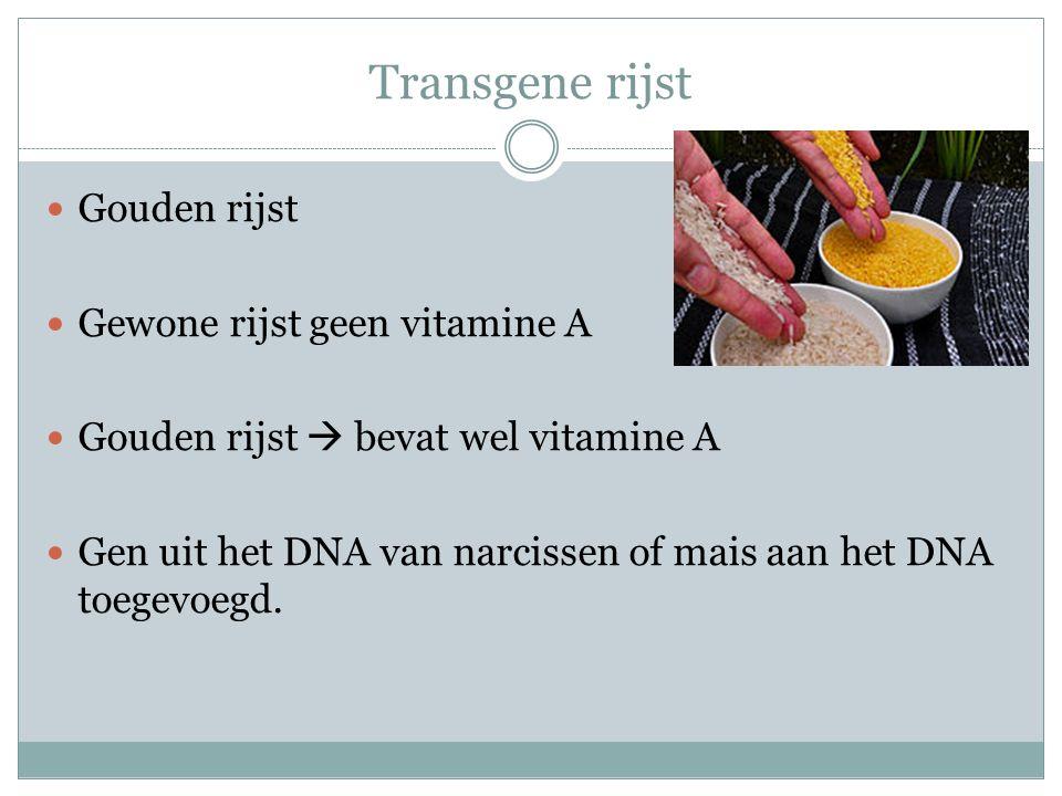 Transgene rijst Gouden rijst Gewone rijst geen vitamine A Gouden rijst  bevat wel vitamine A Gen uit het DNA van narcissen of mais aan het DNA toegev