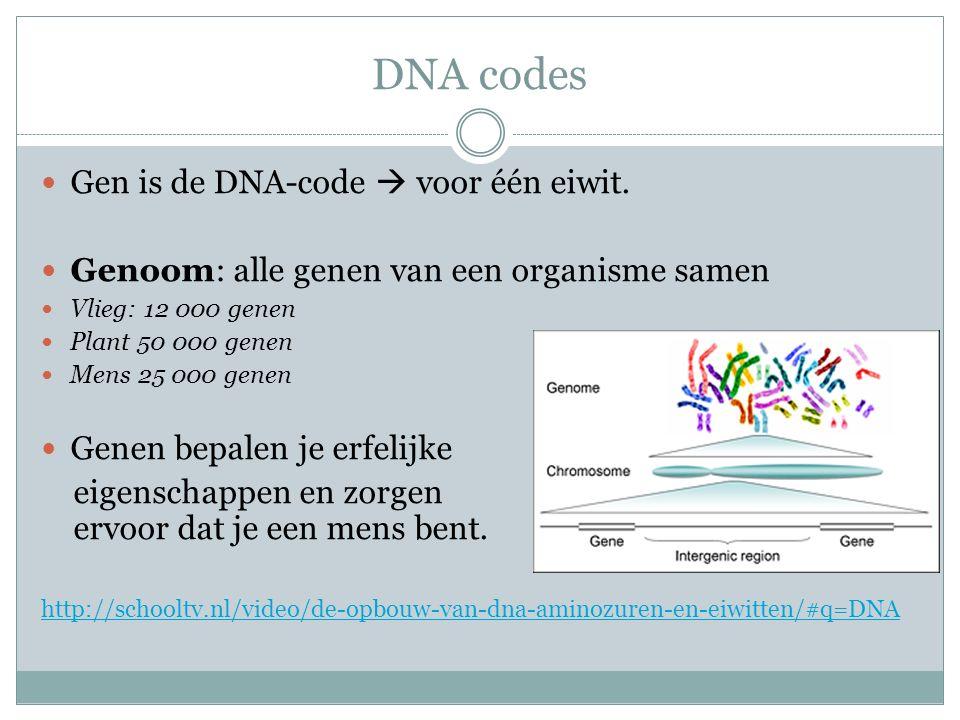 DNA codes Gen is de DNA-code  voor één eiwit. Genoom: alle genen van een organisme samen Vlieg: 12 000 genen Plant 50 000 genen Mens 25 000 genen Gen