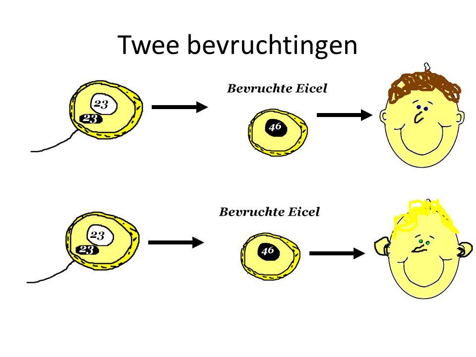 Twee bevruchtingen