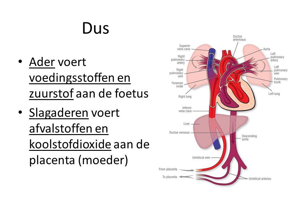 Dus Ader voert voedingsstoffen en zuurstof aan de foetus Slagaderen voert afvalstoffen en koolstofdioxide aan de placenta (moeder)
