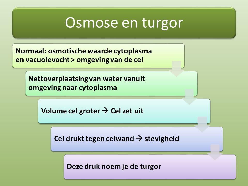 Osmose en turgor Normaal: osmotische waarde cytoplasma en vacuolevocht > omgeving van de cel Nettoverplaatsing van water vanuit omgeving naar cytoplas