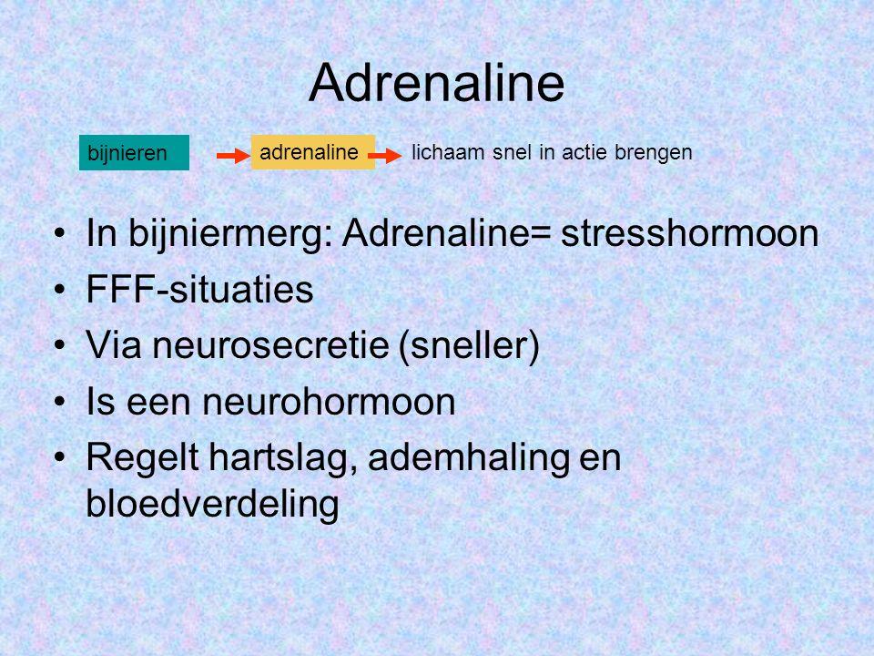 Adrenaline In bijniermerg: Adrenaline= stresshormoon FFF-situaties Via neurosecretie (sneller) Is een neurohormoon Regelt hartslag, ademhaling en bloedverdeling bijnieren adrenalinelichaam snel in actie brengen