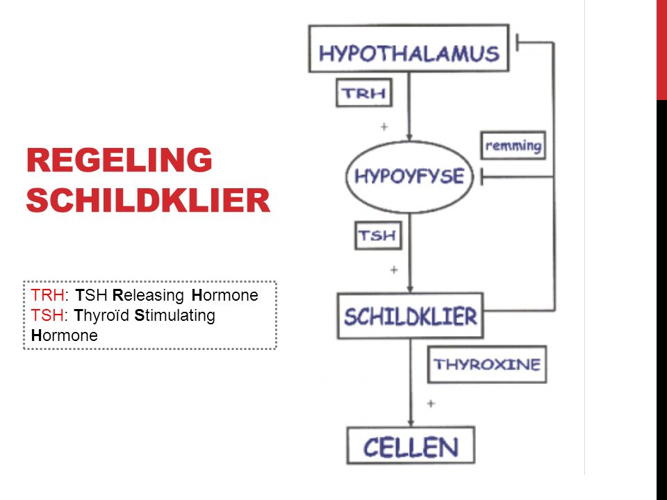 REGELING SCHILDKLIER TRH: TSH Releasing Hormone TSH: Thyroïd Stimulating Hormone