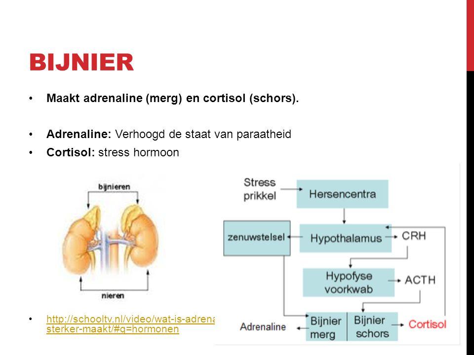 BIJNIER Maakt adrenaline (merg) en cortisol (schors).