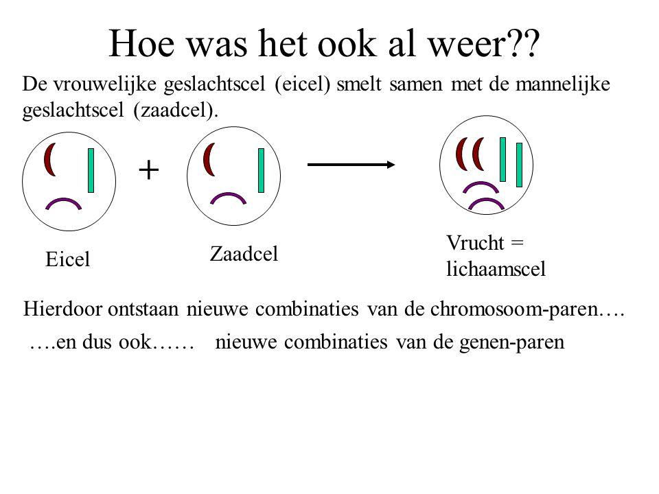 Begrippen 2 Dominant gen Recessief gen Homozygoot heterozygoot Het genenpaar voor een eigenschap bestaat uit twee gelijke genen.