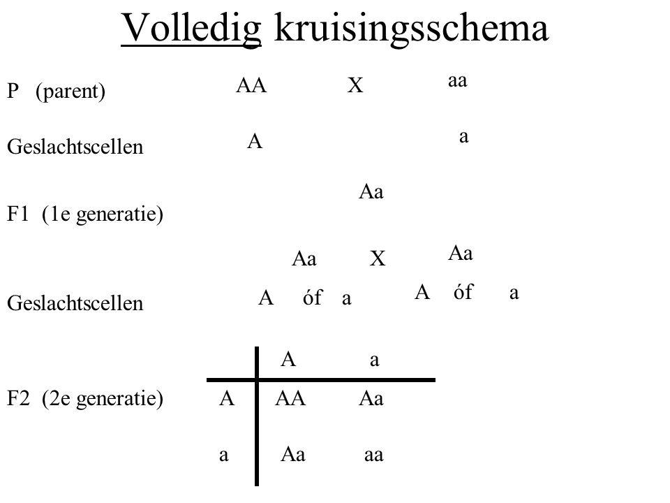 Kruisingsschema`s Een kruisingsschema van een kruising tussen een cavia die homozygoot dominant is voor een zwarte vacht (A) en een witte cavia : Homozygoot dominant: Homozygoot recessief: A aa AAaaX Aa P (parent) Geslachtscellen A a F1 (1e generatie) A