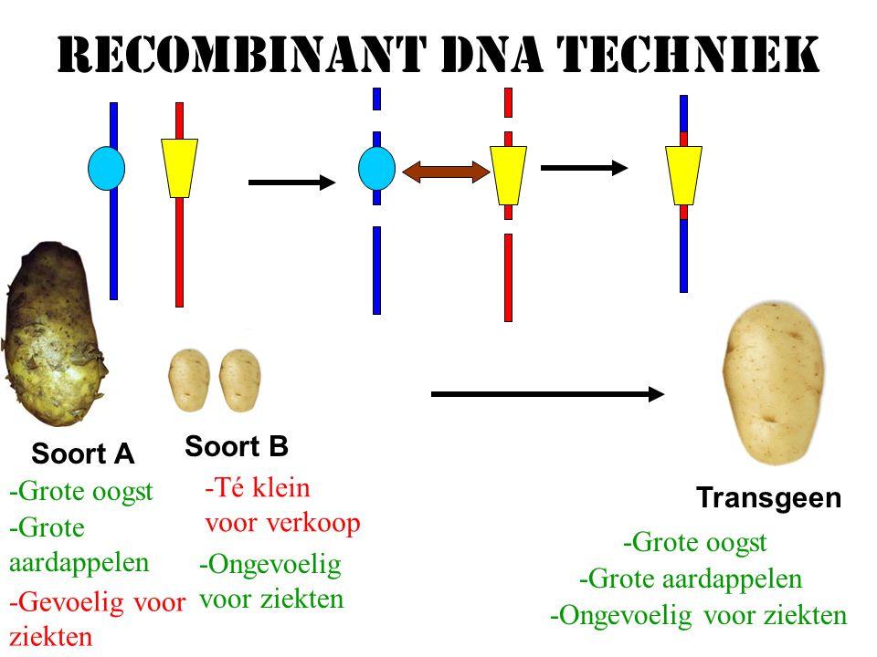 Biotechnologie Productie van voedingsmiddelen,hormonen en geneesmiddelen Voorbeelden:GistBier, brood, wijn Bacteriën:Yoghurt, zuurkool * * * * Genetische modificatie: Recombinant DNA-technieken: Erfelijke eigenschappen verandert DNA van het ene organisme inbouwen in een ander organisme KlonerenUit één cel vele nakomelingen laten komen Alle nakomelingen zijn genetischidentiek aan elkaar Misdaadbestrijding door DNA onderzoek