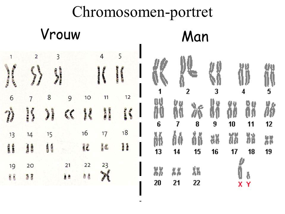 Erfelijke informatie - ligt op de genen - de genen liggen op chromosomen - chromosomen zijn gepaard, dus óók de genen zijn gepaard - alle chromosoomparen zijn identiek, m.u.v de geslachts- chromosomen bij een man