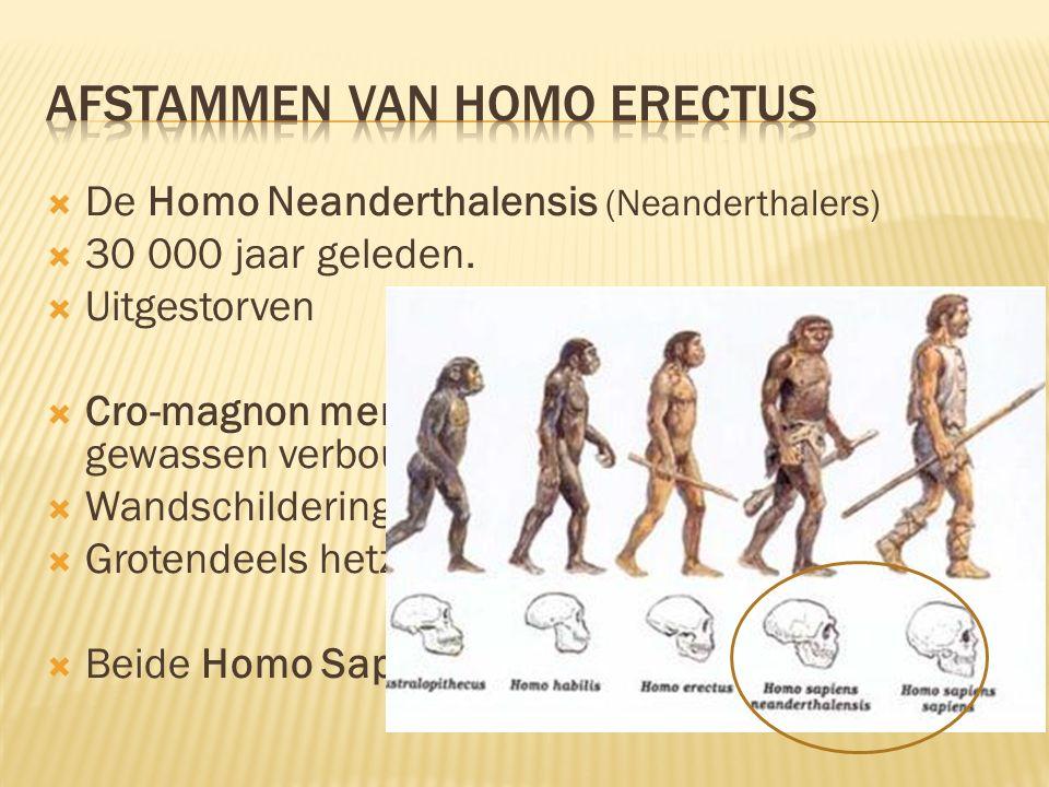  De Homo Neanderthalensis (Neanderthalers)  30 000 jaar geleden.