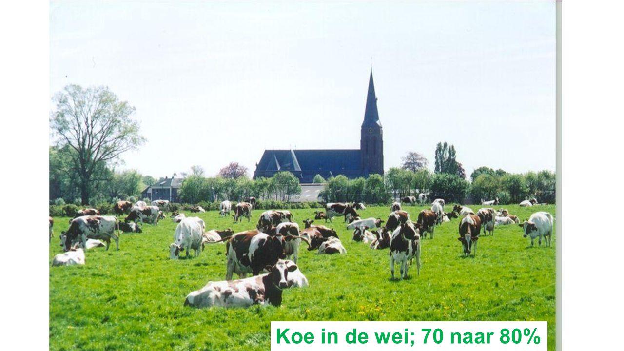 Koe in de wei; 70 naar 80%