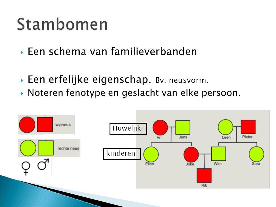  Een schema van familieverbanden  Een erfelijke eigenschap. Bv. neusvorm.  Noteren fenotype en geslacht van elke persoon. Huwelijk kinderen