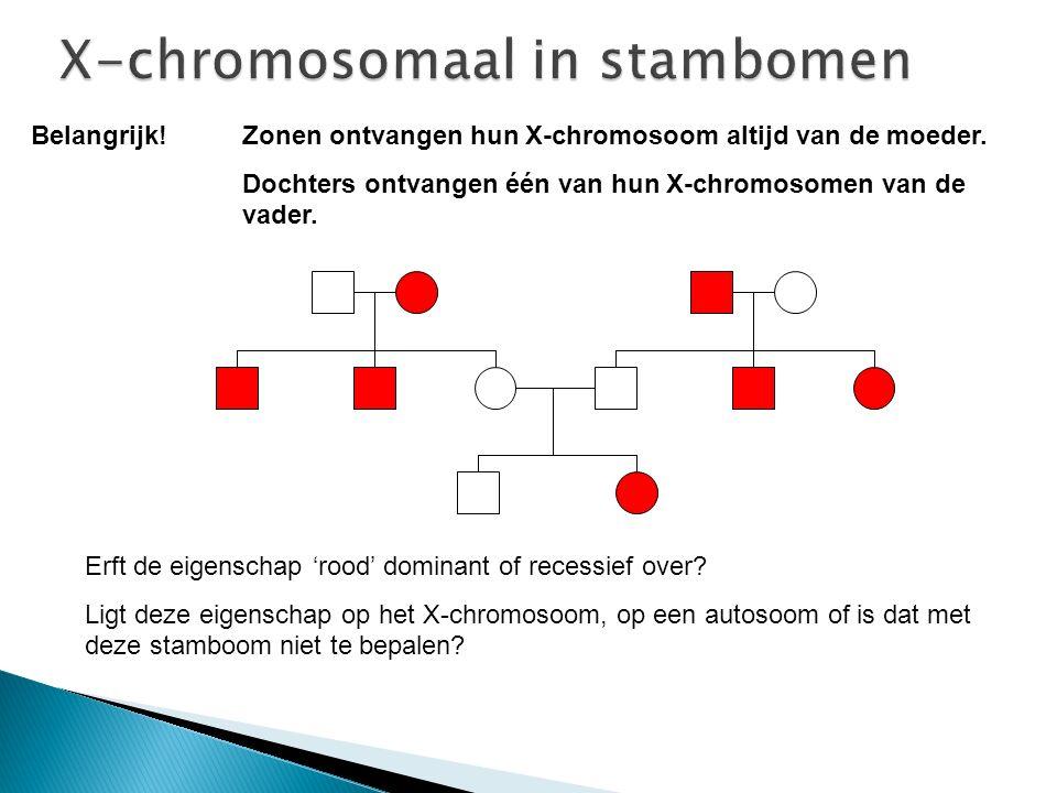 Belangrijk! Zonen ontvangen hun X-chromosoom altijd van de moeder. Dochters ontvangen één van hun X-chromosomen van de vader. Erft de eigenschap 'rood
