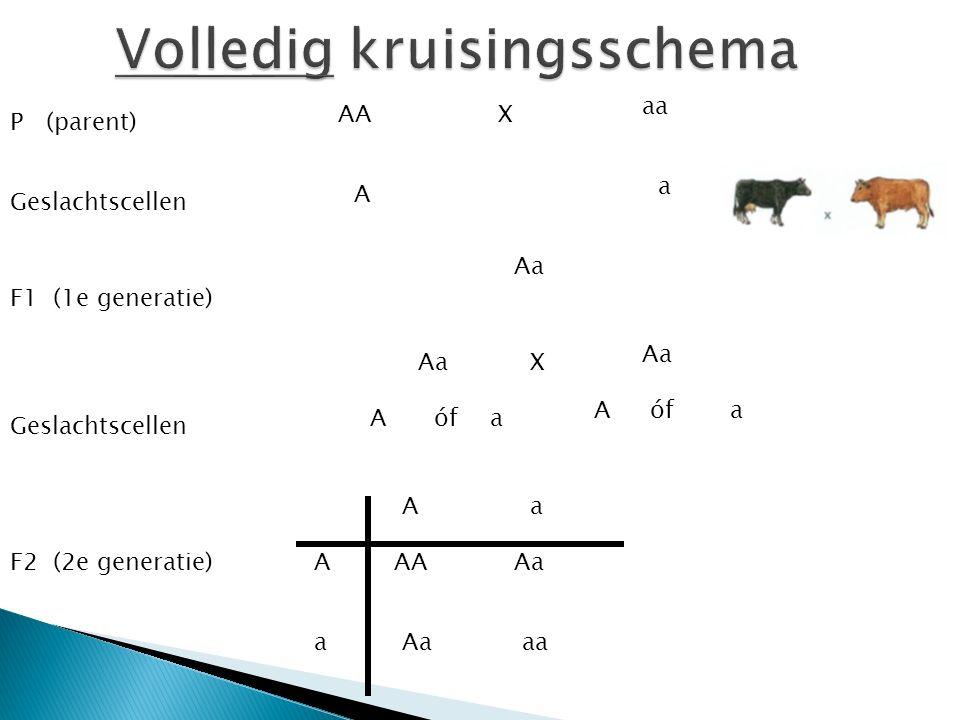 a a A A AA aa Aa F2 Welke fenotypes zien we in de F2.