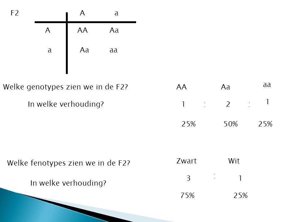 a a A A AA aa Aa F2 Welke fenotypes zien we in de F2? WitZwart Welke genotypes zien we in de F2? In welke verhouding? 1 1 1 2 3 25% 50% 75% In welke v