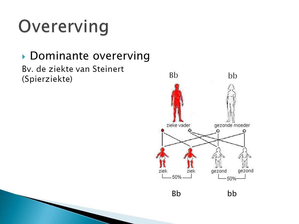  Dominante overerving Bv. de ziekte van Steinert (Spierziekte) Bb bb