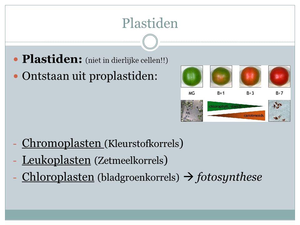 Plastiden Plastiden: (niet in dierlijke cellen!!) Ontstaan uit proplastiden: - Chromoplasten (Kleurstofkorrels ) - Leukoplasten (Zetmeelkorrels ) - Chloroplasten (bladgroenkorrels)  fotosynthese