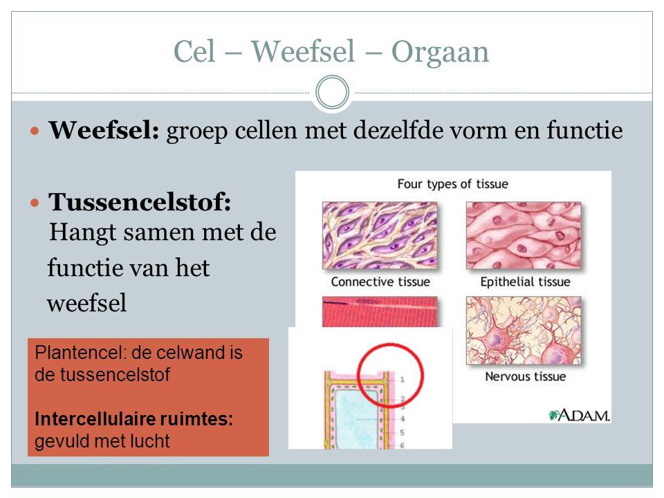 Cel – Weefsel – Orgaan Weefsel: groep cellen met dezelfde vorm en functie Tussencelstof: Hangt samen met de functie van het weefsel Plantencel: de celwand is de tussencelstof Intercellulaire ruimtes: gevuld met lucht
