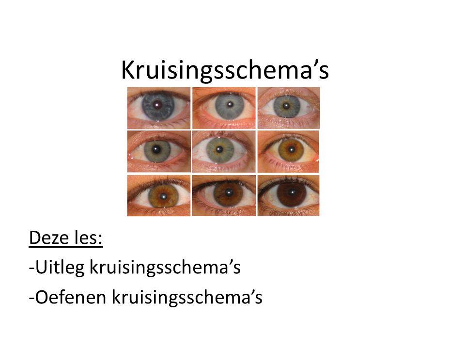 Terugblikken 46 chromosomen (23 paar) Chromosoom = eiwit + DNA Gen = stukje DNA – Gen voor je oogkleur ligt op chromosmen paar 15