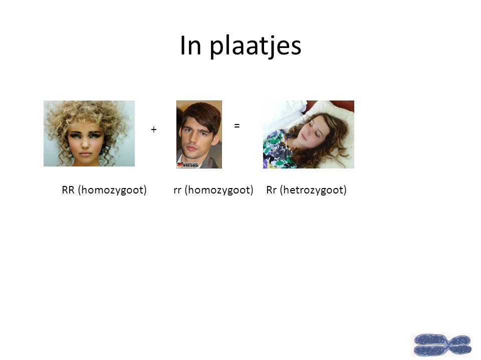 In plaatjes + = RR (homozygoot) rr (homozygoot) Rr (hetrozygoot)