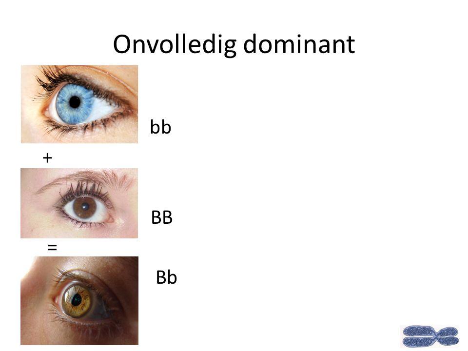 Onvolledig dominant bb + BB = Bb