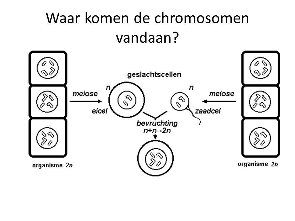 Waar komen de chromosomen vandaan