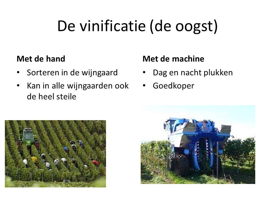 De vinificatie (de oogst) Met de hand Sorteren in de wijngaard Kan in alle wijngaarden ook de heel steile Met de machine Dag en nacht plukken Goedkoper