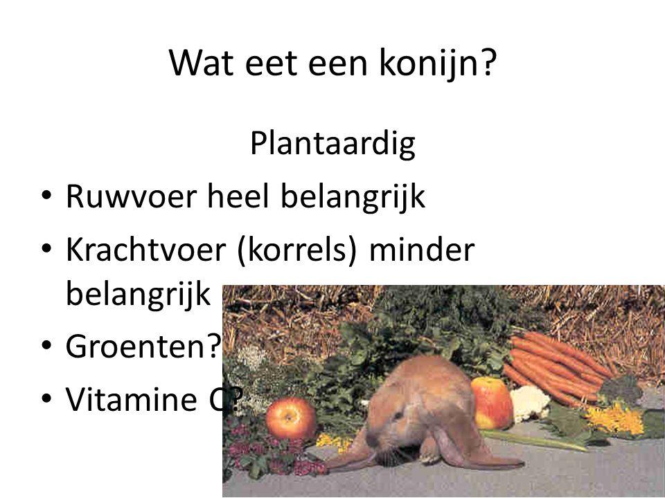Wat eet een konijn? Plantaardig Ruwvoer heel belangrijk Krachtvoer (korrels) minder belangrijk Groenten? Vitamine C?
