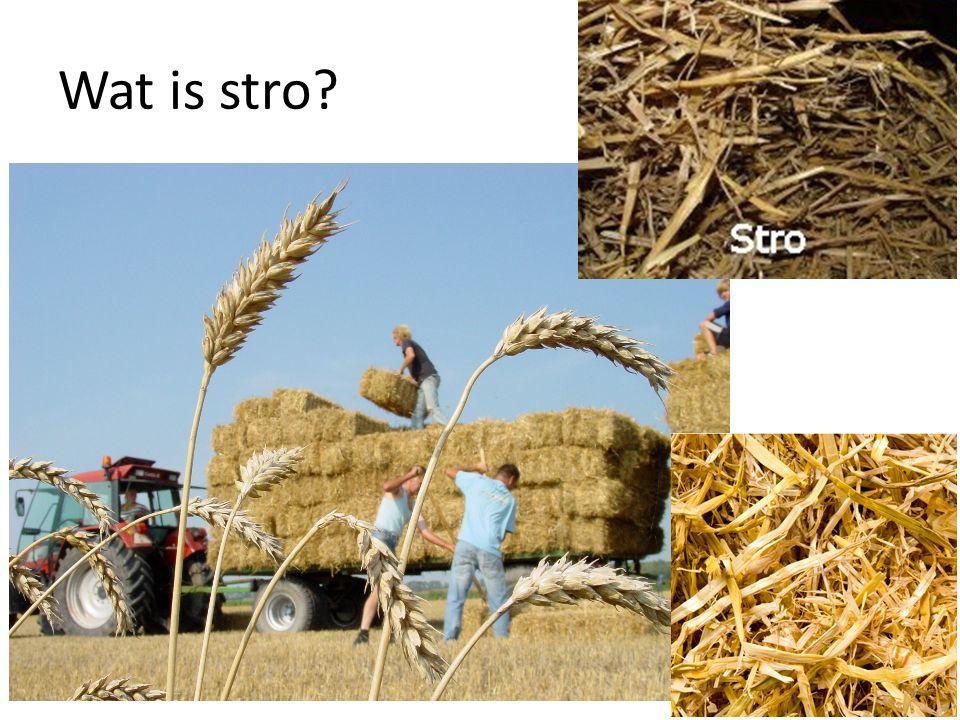 Wat is stro?
