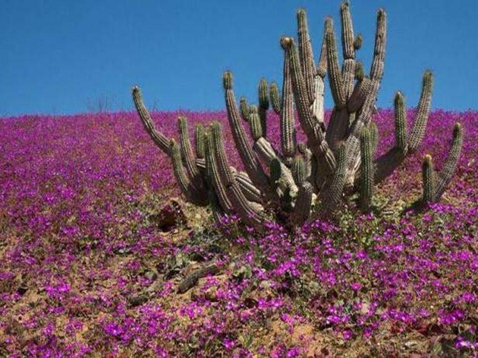 Bloemen, in alle vormen en kleuren toveren dan 'n wijds kleurenpalet