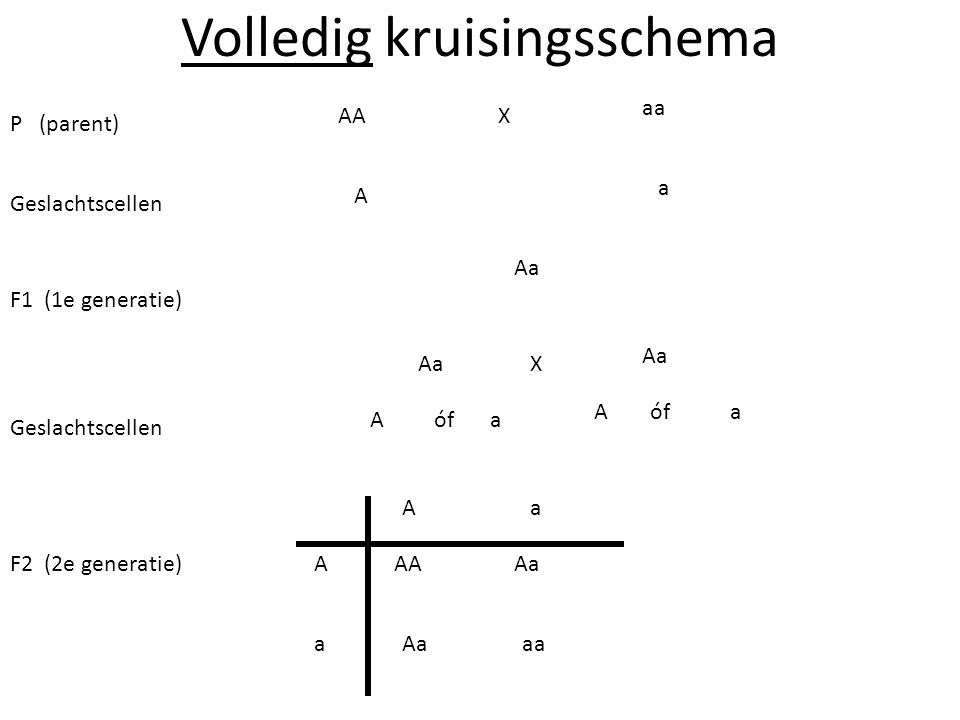 Volledig kruisingsschema P (parent) F1 (1e generatie) Geslachtscellen F2 (2e generatie) AA aa Aa A A A A A a a a a a X X óf