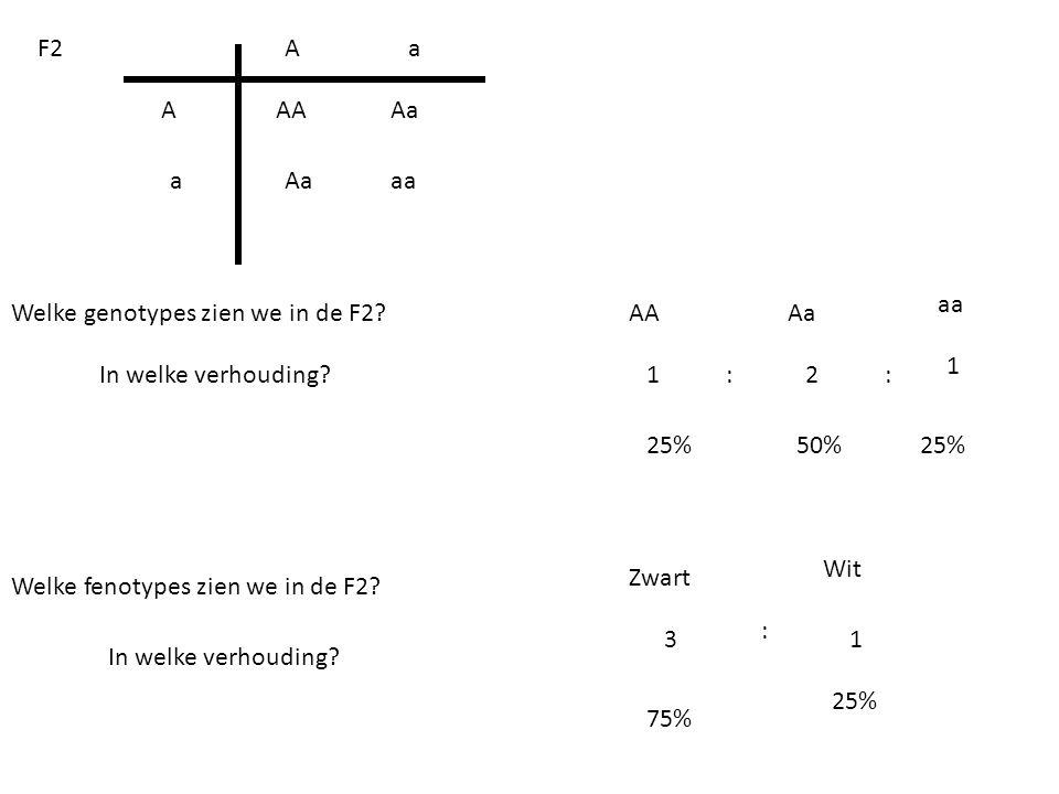 a a A A AA aa Aa F2 Welke fenotypes zien we in de F2? Wit Zwart Welke genotypes zien we in de F2? In welke verhouding? 1 1 1 2 3 25% 50% 75% In welke