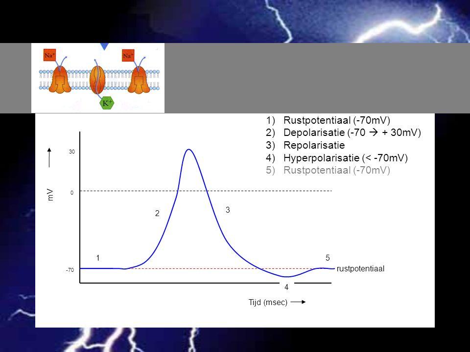 Tijd (msec) mV -70 0 30 rustpotentiaal 1 2 3 4 5 1)Rustpotentiaal (-70mV) 2)Depolarisatie (-70  + 30mV) 3)Repolarisatie 4)Hyperpolarisatie (< -70mV)