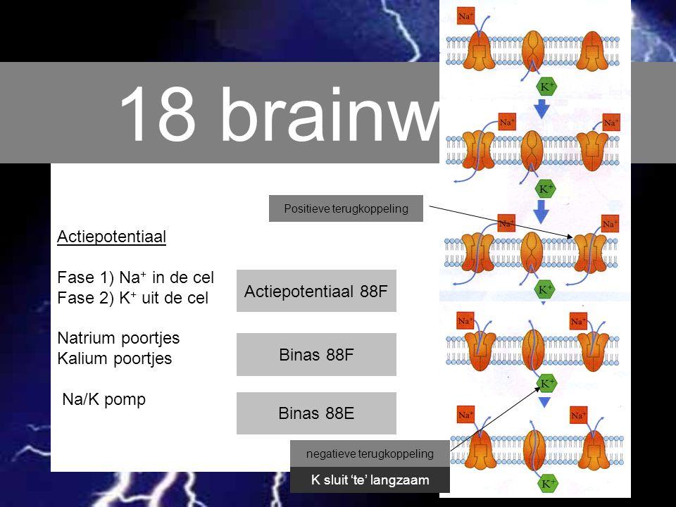 18 brainwave Actiepotentiaal Fase 1) Na + in de cel Fase 2) K + uit de cel Natrium poortjes Kalium poortjes Na/K pomp Binas 88F Actiepotentiaal 88F Bi