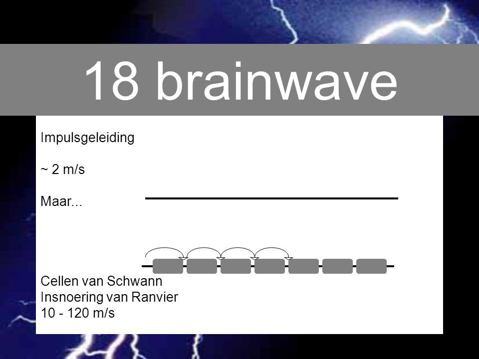 18 brainwave Impulsgeleiding ~ 2 m/s Maar... Cellen van Schwann Insnoering van Ranvier 10 - 120 m/s