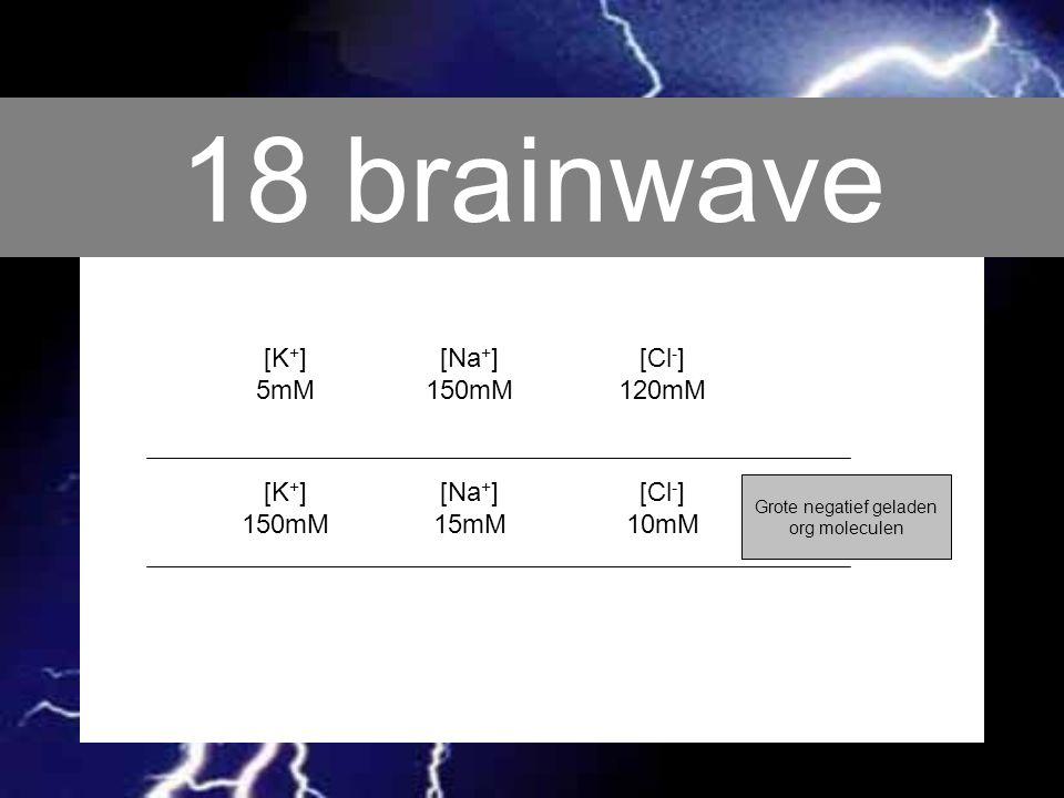 18 brainwave [K + ] 5mM [Na + ] 150mM [Cl - ] 120mM [K + ] 150mM [Na + ] 15mM [Cl - ] 10mM Grote negatief geladen org moleculen
