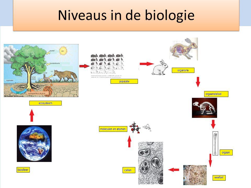 Niveaus in de biologie