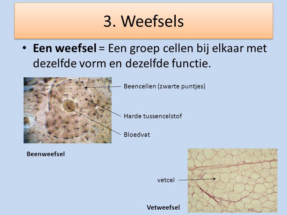3. Weefsels Een weefsel = Een groep cellen bij elkaar met dezelfde vorm en dezelfde functie. Beencellen (zwarte puntjes) Harde tussencelstof Bloedvat