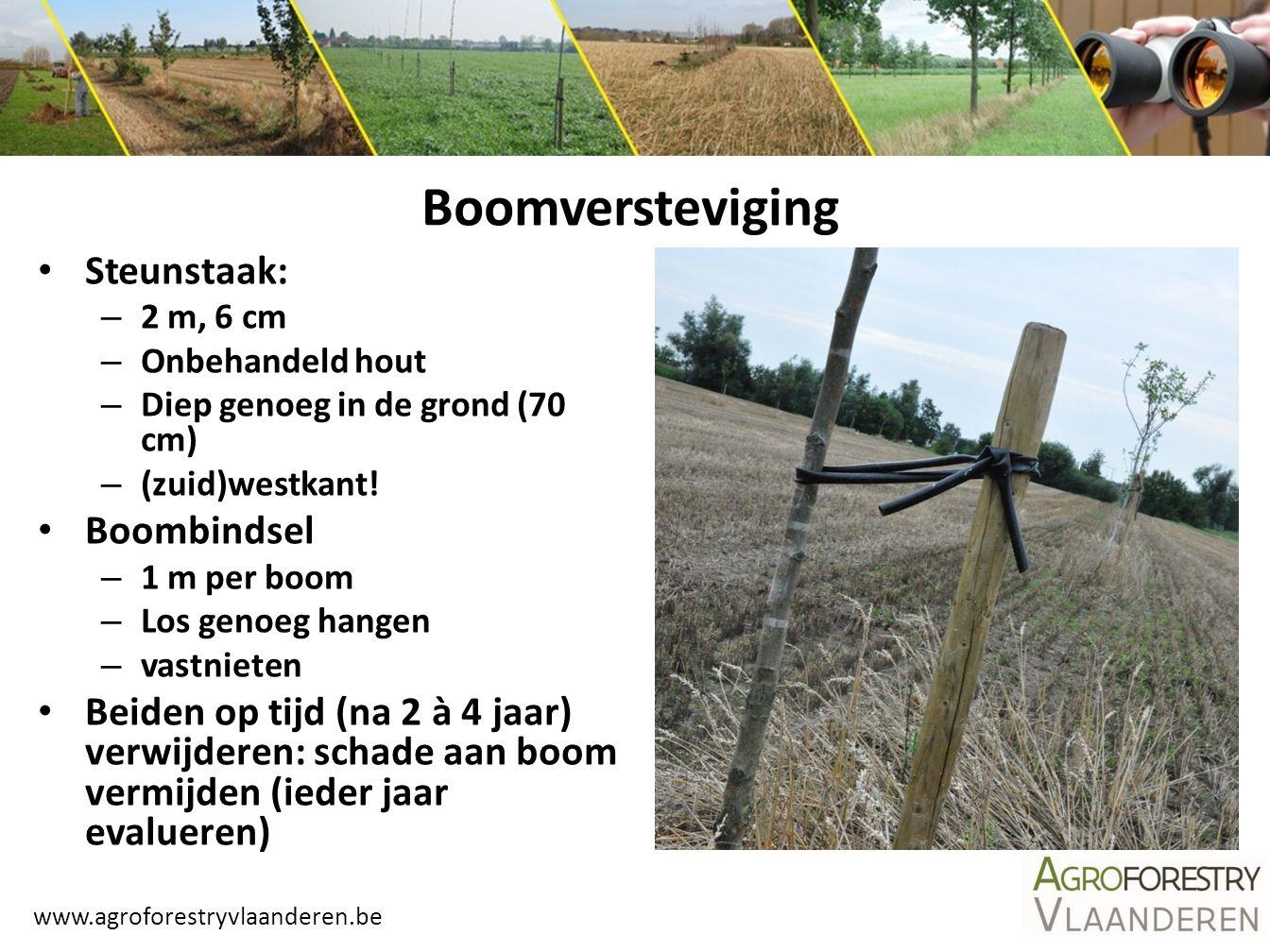 www.agroforestryvlaanderen.be Boomversteviging Steunstaak: – 2 m, 6 cm – Onbehandeld hout – Diep genoeg in de grond (70 cm) – (zuid)westkant! Boombind