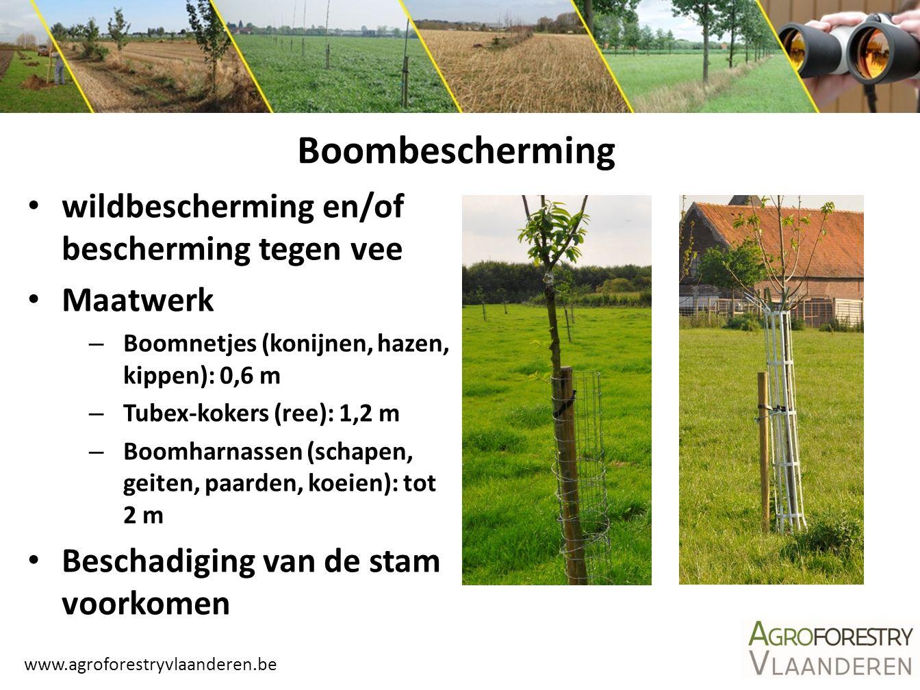www.agroforestryvlaanderen.be Boombescherming wildbescherming en/of bescherming tegen vee Maatwerk – Boomnetjes (konijnen, hazen, kippen): 0,6 m – Tub