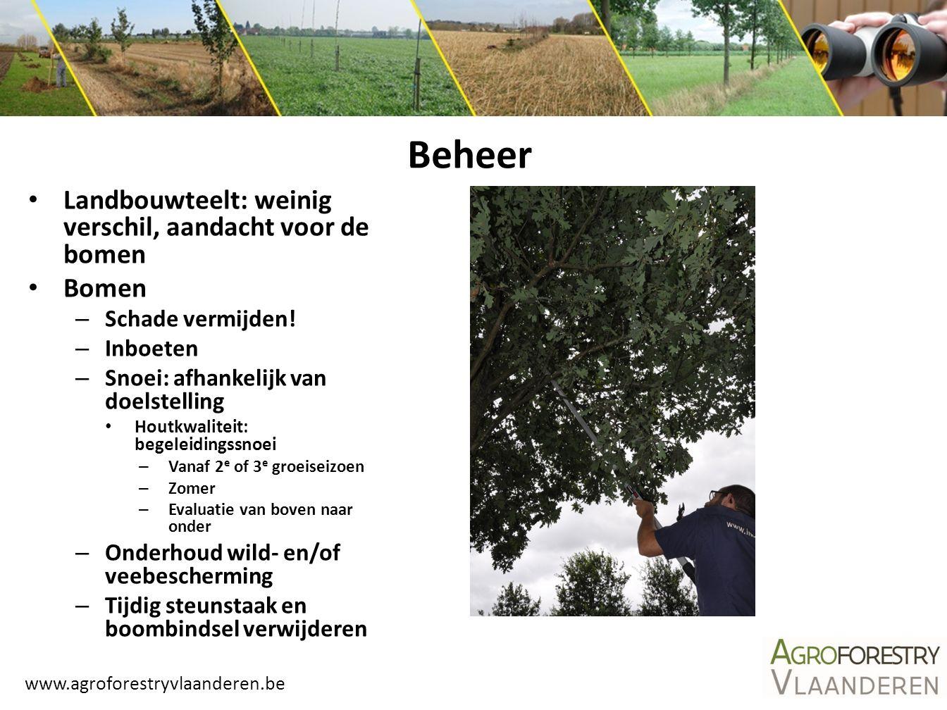 www.agroforestryvlaanderen.be Landbouwteelt: weinig verschil, aandacht voor de bomen Bomen – Schade vermijden! – Inboeten – Snoei: afhankelijk van doe