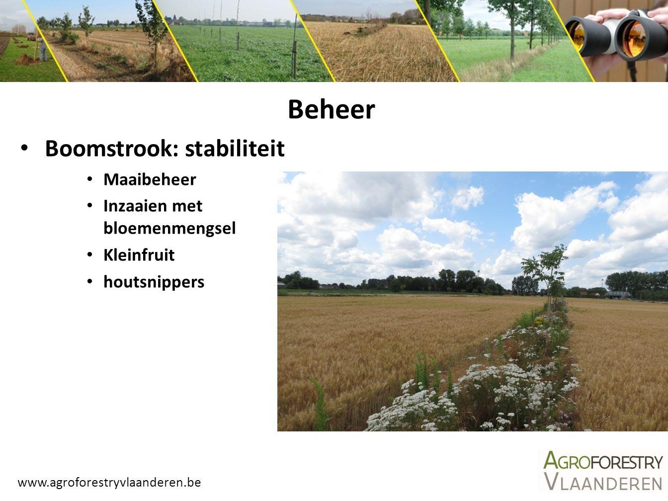 www.agroforestryvlaanderen.be Boomstrook: stabiliteit Maaibeheer Inzaaien met bloemenmengsel Kleinfruit houtsnippers Beheer
