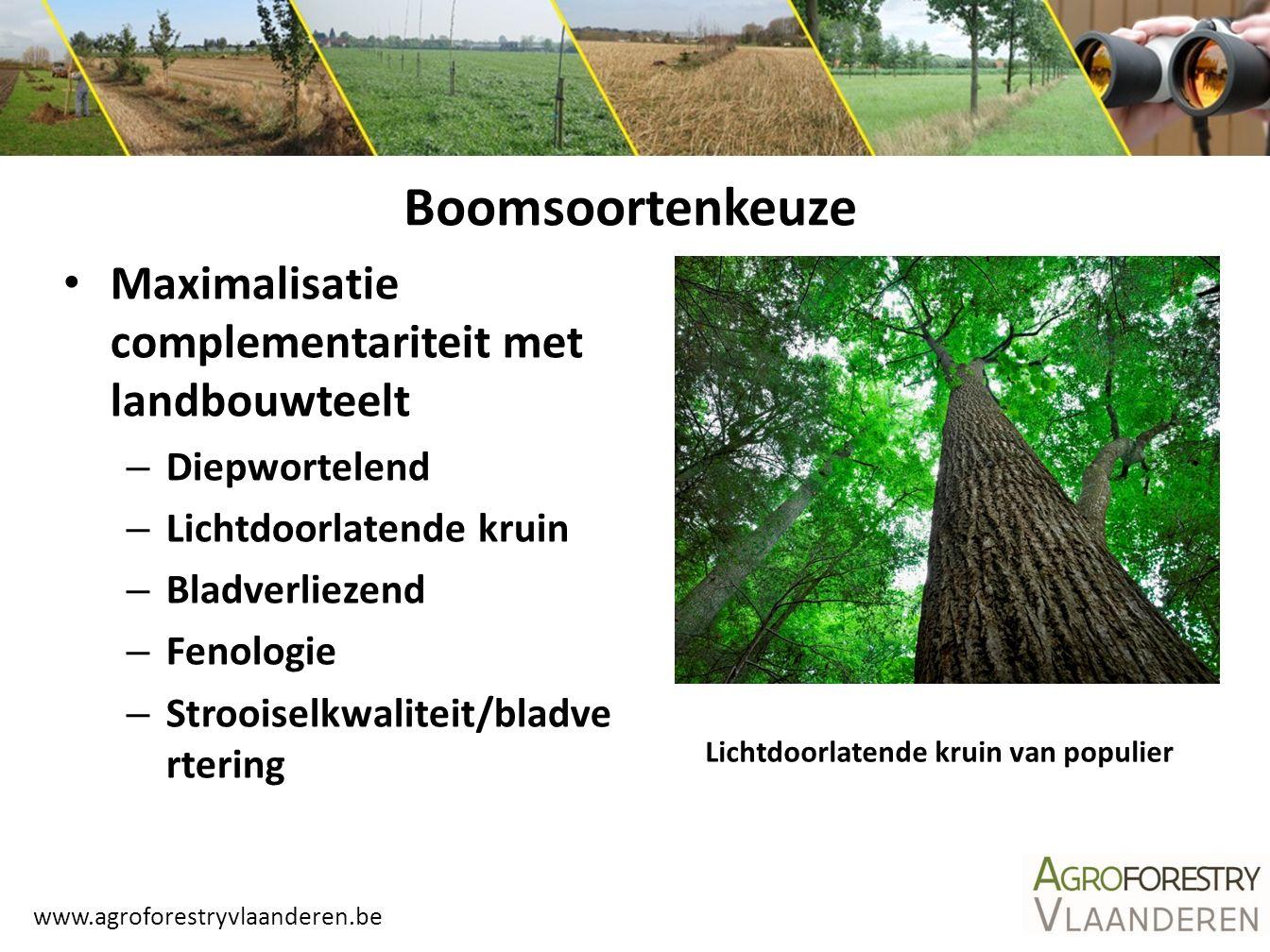 www.agroforestryvlaanderen.be Boomsoortenkeuze Maximalisatie complementariteit met landbouwteelt – Diepwortelend – Lichtdoorlatende kruin – Bladverlie