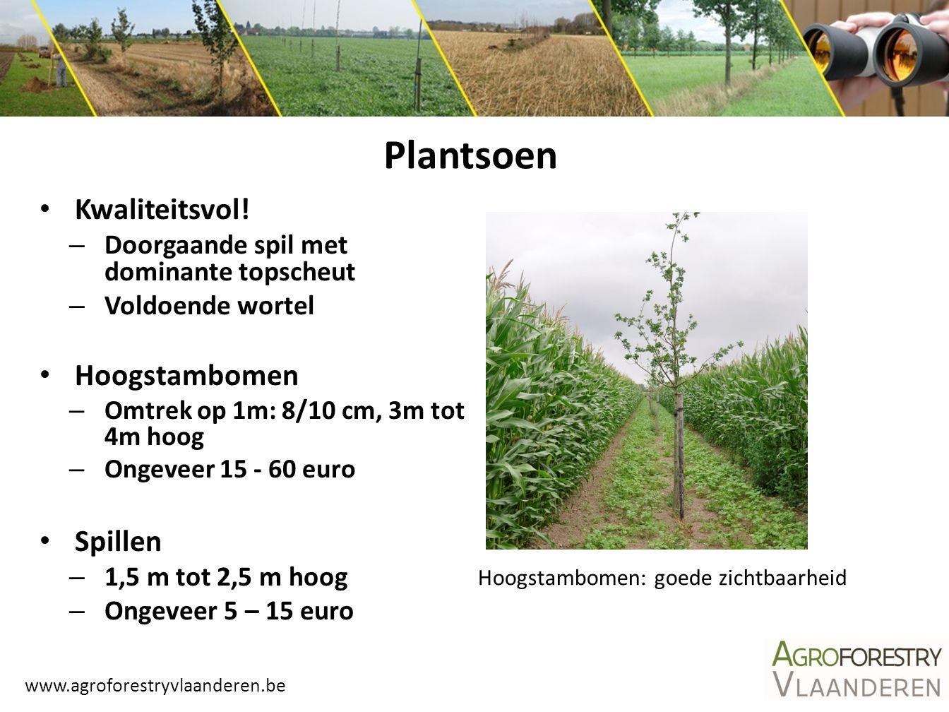 www.agroforestryvlaanderen.be Plantsoen Bosplantsoen – 0,2 – 1,5 m hoog – Ongeveer 0,3 – 3 euro Poten (onbeworteld) – Populieren en wilgen – 1,5 m tot 4 m hoog – Ongeveer 5 – 15 euro Allen hebben voordelen en nadelen: afweging Gewoon bosplantsoen met tubex-koker