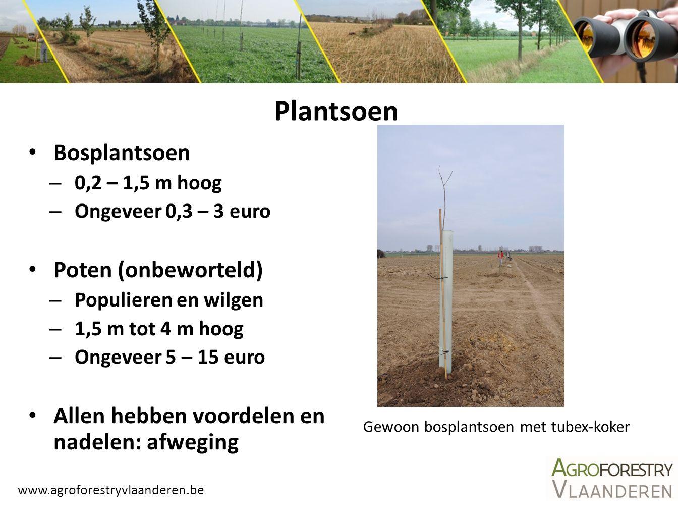 www.agroforestryvlaanderen.be Plantsoen Bosplantsoen – 0,2 – 1,5 m hoog – Ongeveer 0,3 – 3 euro Poten (onbeworteld) – Populieren en wilgen – 1,5 m tot